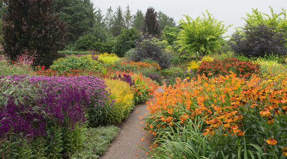 Image of Perennial & Herbaceous Mix